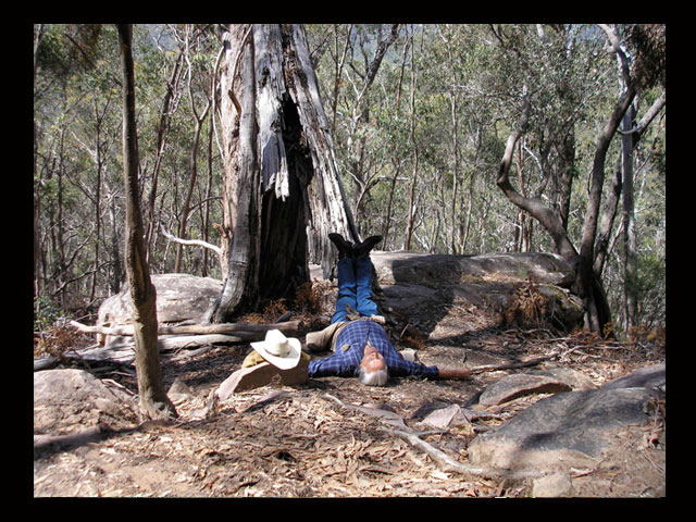 Letting the blood go to my head at the foot of an old eucalyptus tree on top of Sugarloaf mountain outside of Melbourne, Australia.